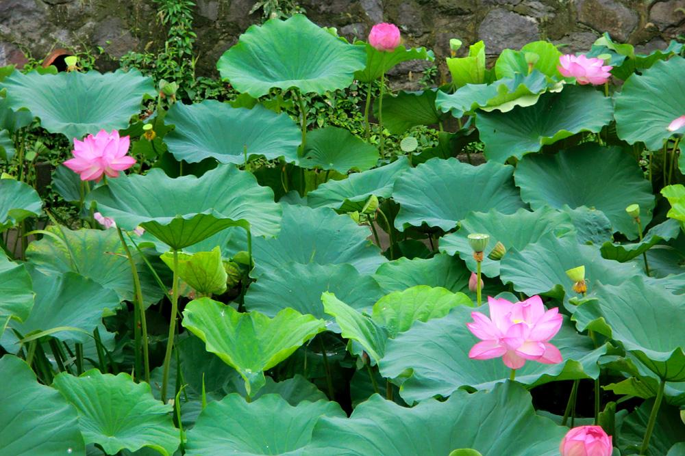 http://www.okaya-shinpukuji.jp/blog/images/img01.JPG